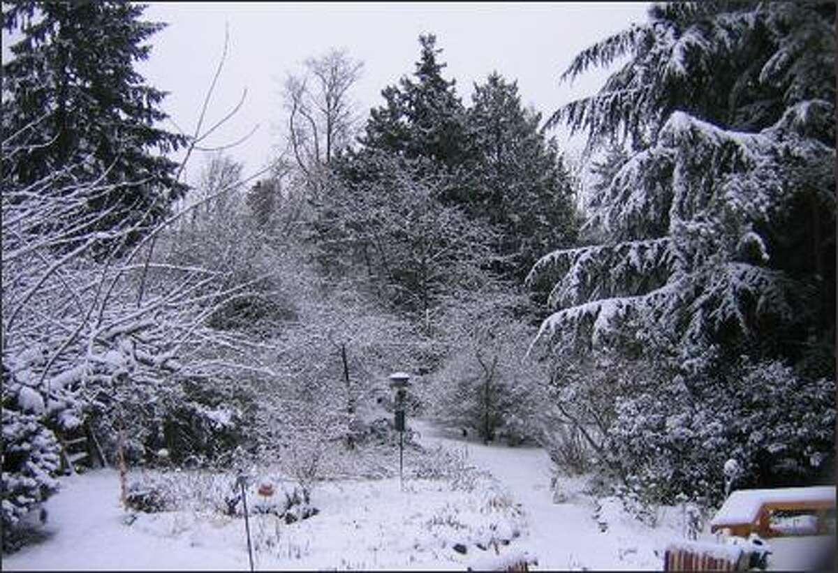 Lovely, delicate snowfall on Carkeek Park. (Denise Joines)