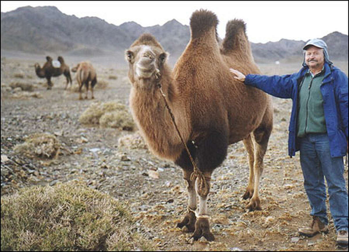 P-I's Larry Johnson getting up close and personal with his first Mongolian camel.
