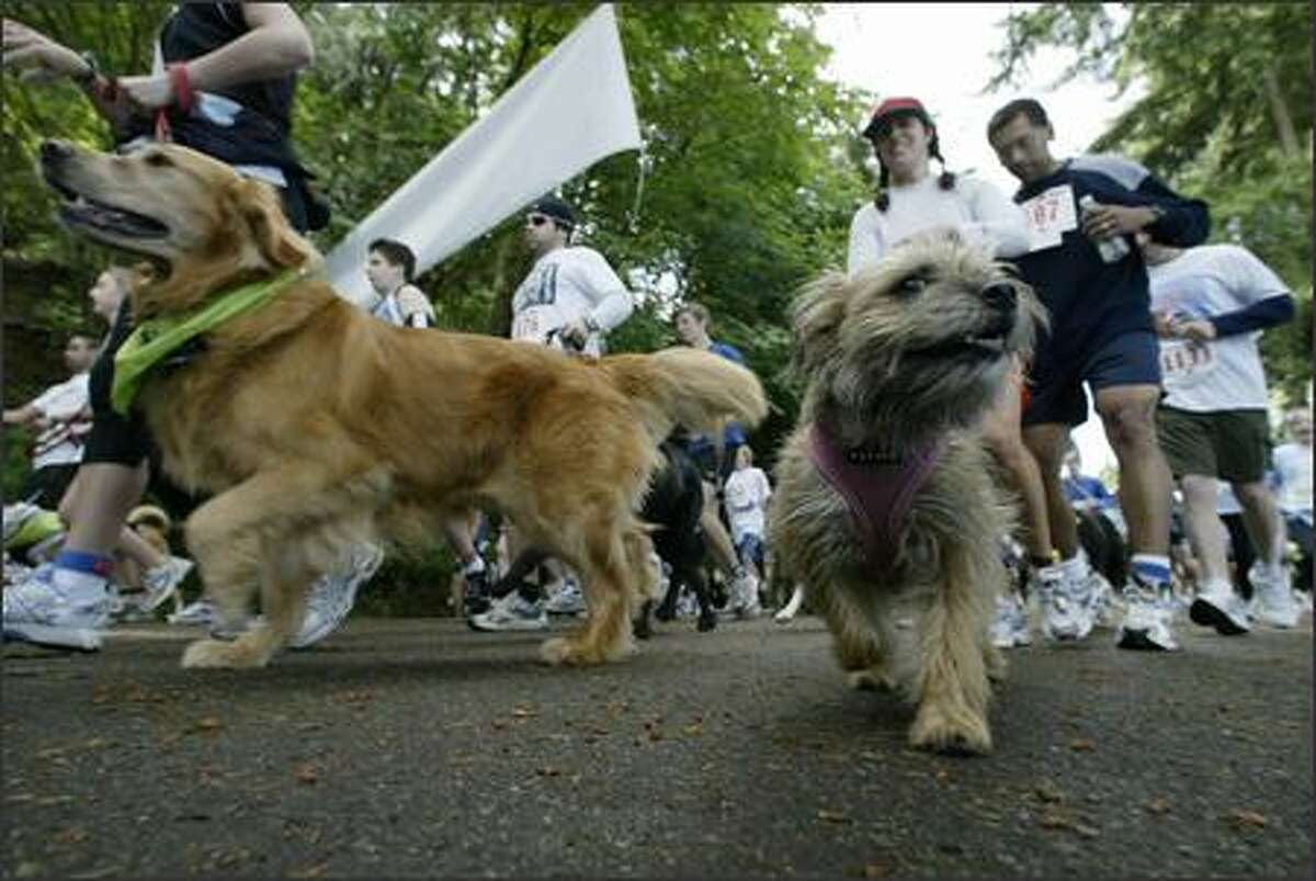 Dogs and their masters run past the starting line in the 8th Annual Furry 5K Fun Run and Walk at Seattle's Seward Park. Over 3,000 participants showed up for the annual event which raises money for the Seattle Animal Shelter.