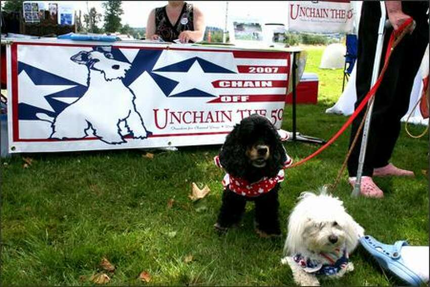 Two dogs relax in the sunshine near the Unchain the 50 Event in Marymoor Park, Redmond.