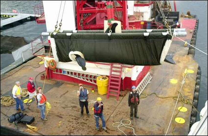 A crane hoists the 1,348-pound orca whale in a sling onto a waiting catamaran ferry as crew and veterinarians Pete Schroeder, far left in yellow, and David Huff, second left, watch in Manchester. The whale will make the 400-mile trip to her native Canadian waters in 10-12 hours.