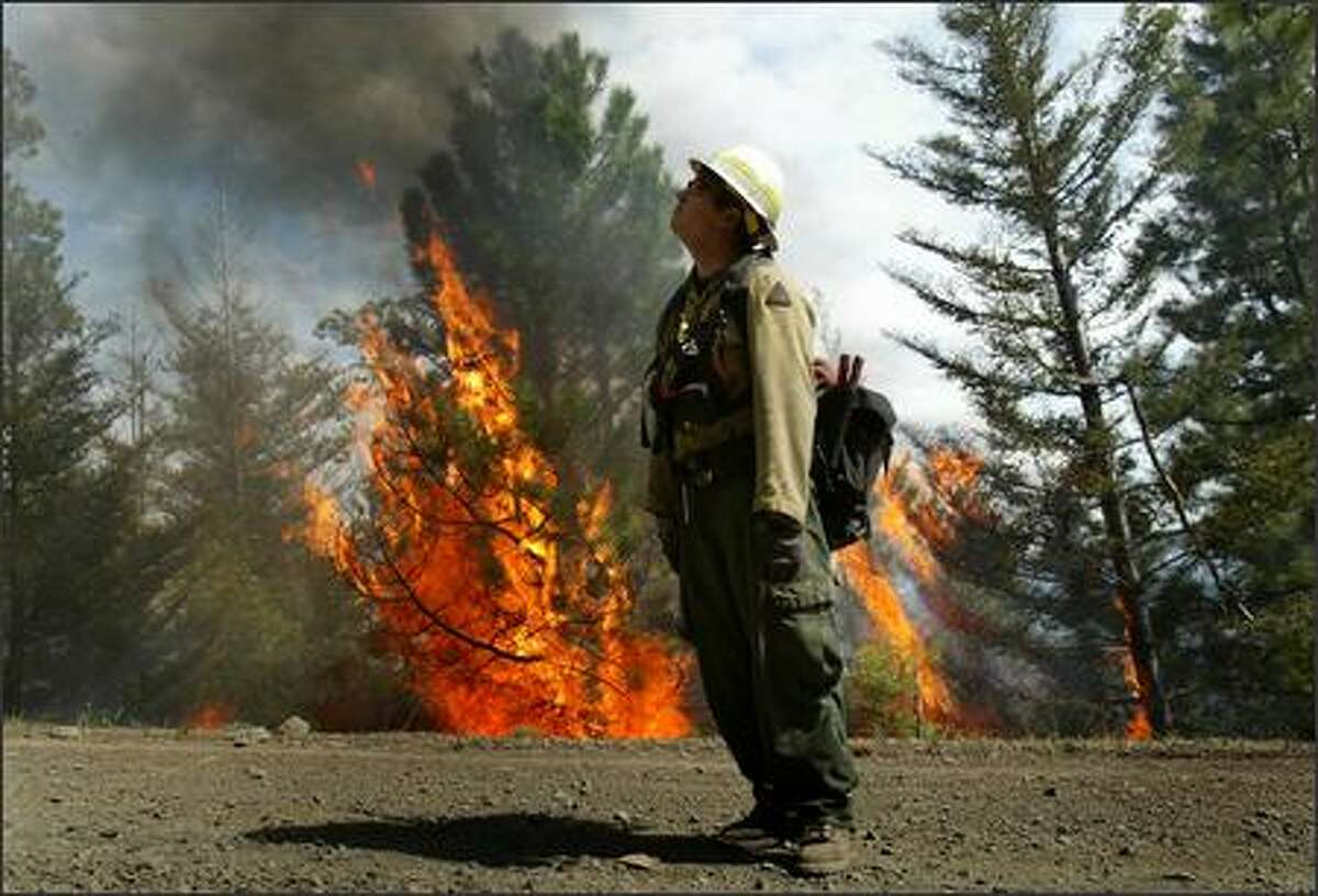 Firefighter Mike Jensen with the U.S. Forest Service watches embers drift over a road used as a firebreak while a tree flares up like a torch during a controlled burn in the Okanagan-Wenatchee National Forest near Naches on Friday May 18, 2007. The burn was to thin dense ground cover to prevent future wild fires as part of a forest management plan.