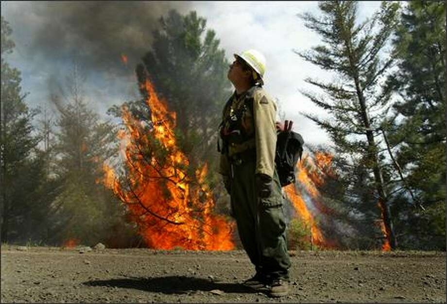 Firefighter Mike Jensen with the U.S. Forest Service watches embers drift over a road used as a firebreak while a tree flares up like a torch during a controlled burn in the Okanagan-Wenatchee National Forest near Naches on Friday May 18, 2007. The burn was to thin dense ground cover to prevent future wild fires as part of a forest management plan. Photo: Joshua Trujillo, Seattlepi.com