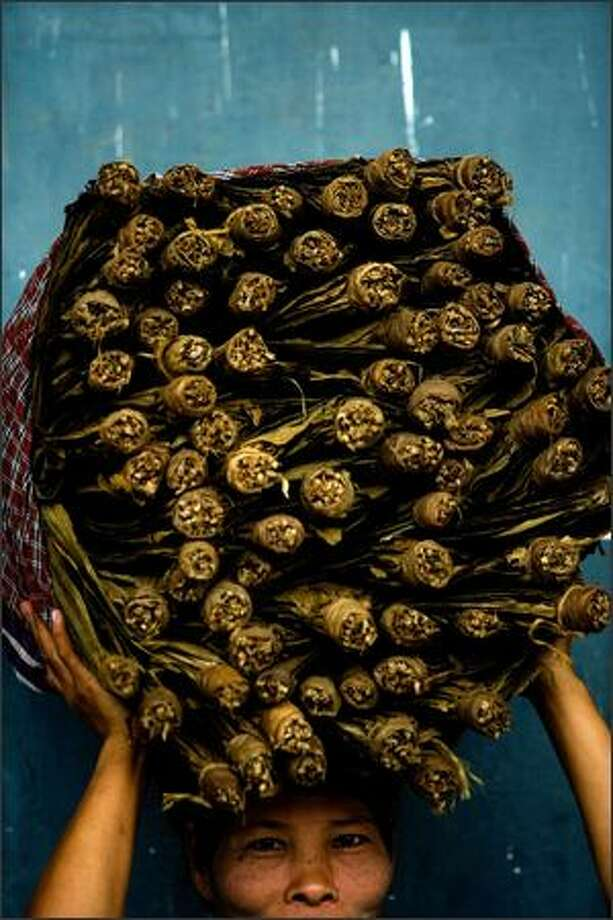 A woman carries a load of tobacco on her head in preparation for its transportation at a tobacco warehouse on June 18, 2007 in Jember, Indoensia. Despite Indonesia's troubled and struggling economy, the country continues to produce quality tobacco for cigar production throughout the world, which it has done so since late 1700. In Indoensia, a majority of tobacco is harvested in Jember, East Java. PT Ledokombo, the largest exporter of tobacco for cigars in Jember, is responsible for 60% of the export in the region and their tobacco is exported to countries including Cuba, France, Algeria and Spain. Photo by Kristian Dowling/Getty Images