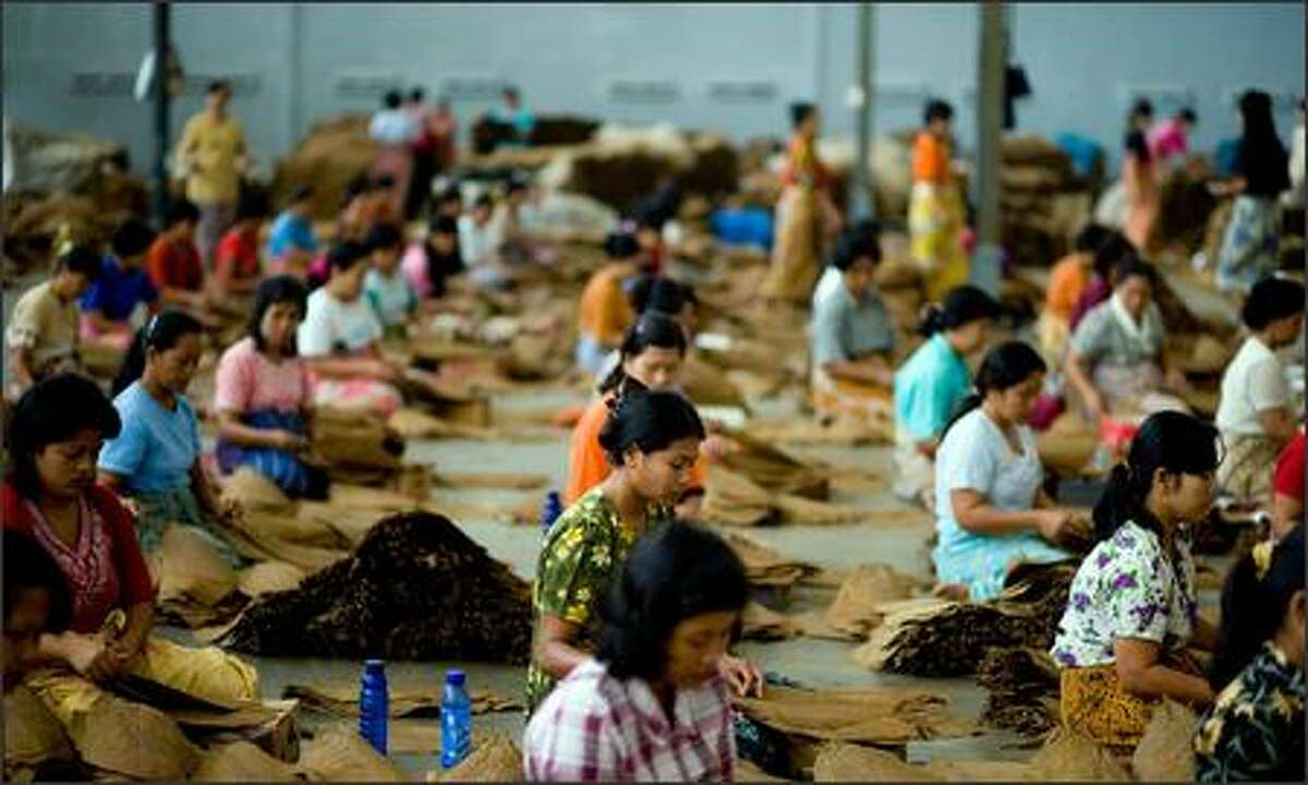 Women sort through tobacco leaves by quality at a tobacco warehouse on June 18, 2007 in Jember, Indoensia. Despite Indonesia's troubled and struggling economy, the country continues to produce quality tobacco for cigar production throughout the world, which it has done so since late 1700. In Indoensia, a majority of tobacco is harvested in Jember, East Java. PT Ledokombo, the largest exporter of tobacco for cigars in Jember, is responsible for 60% of the export in the region and their tobacco is exported to countries including Cuba, France, Algeria and Spain. Photo by Kristian Dowling/Getty Images