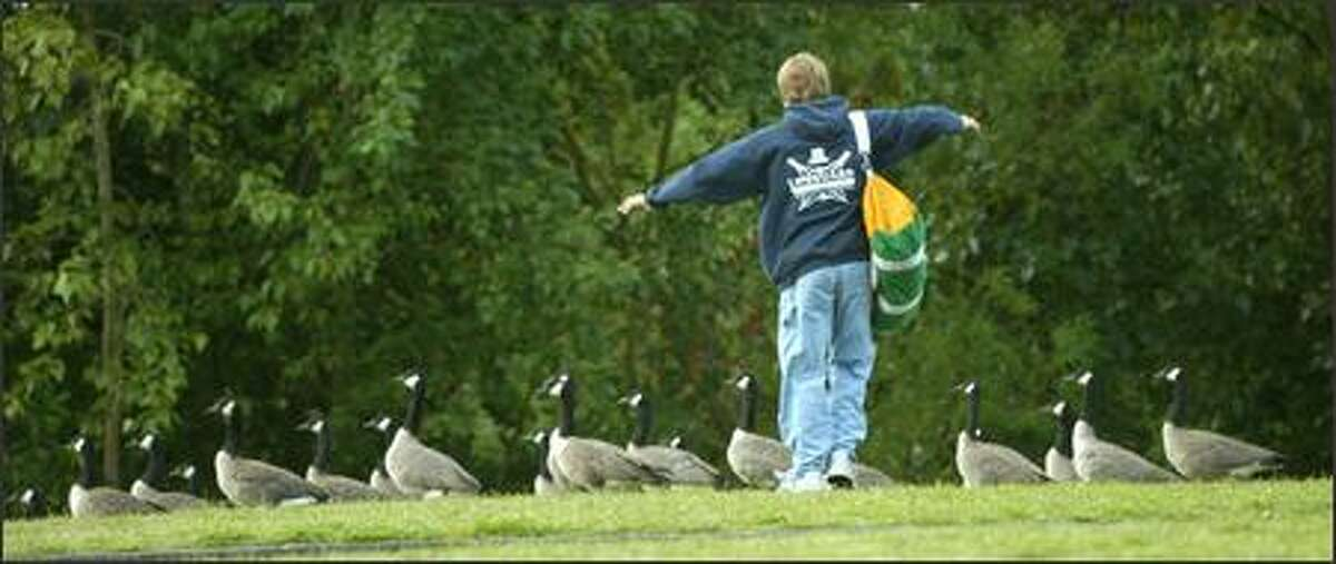 As anyone who frequents beaches in Seattle can tell you, geese are a problem. On Wednesday, August 8, 2007, geese had to be chased from the West Green Lake beach before the start of the annual competition between teams of lifeguards from Seattle beaches.
