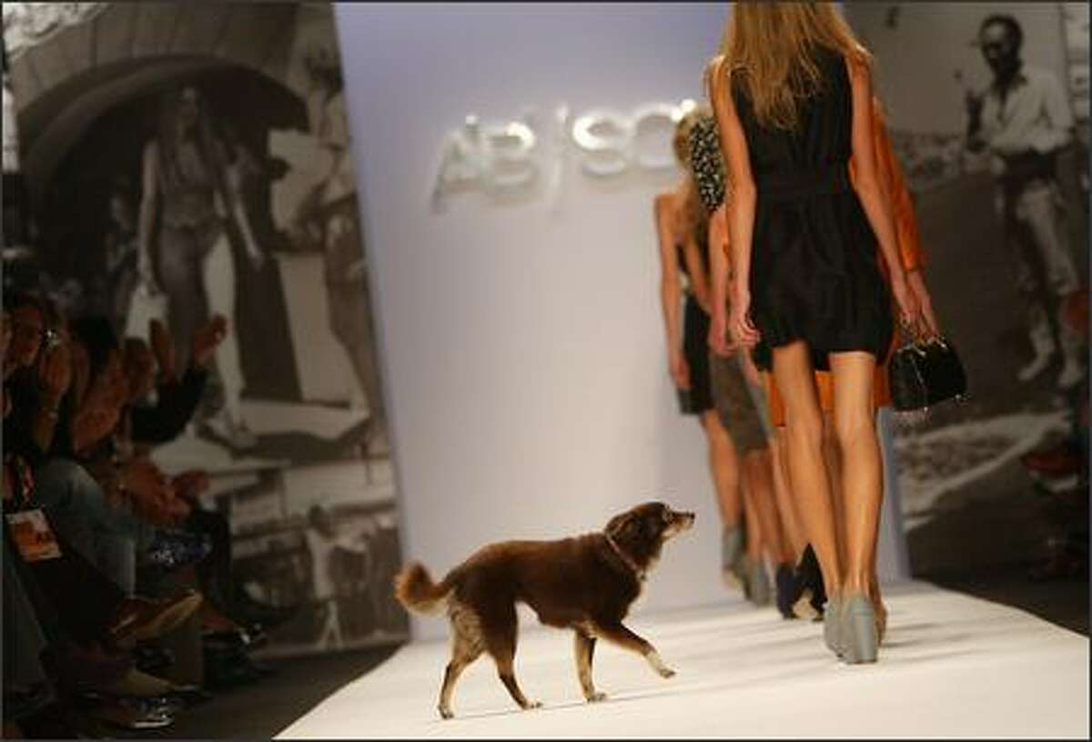 A dog crosses the catwalk as models present creations by Ab Soul.