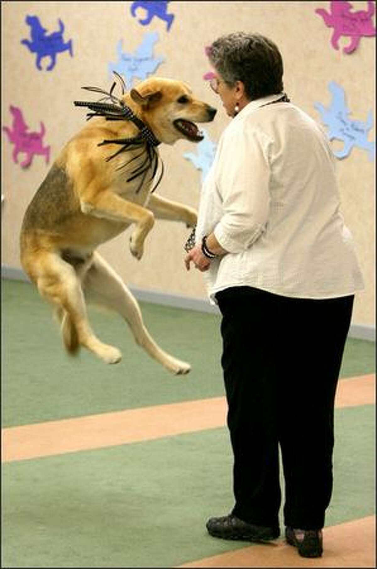 Joan Ethier of Port Angeles dances with Lab mix Yukon King in the novice division of the musical freestyle class. Yukon King was one of more than 140 dogs and their U.S./Canadian owners dancing the mambo, cha cha, waltz, hip-hop and other styles during the