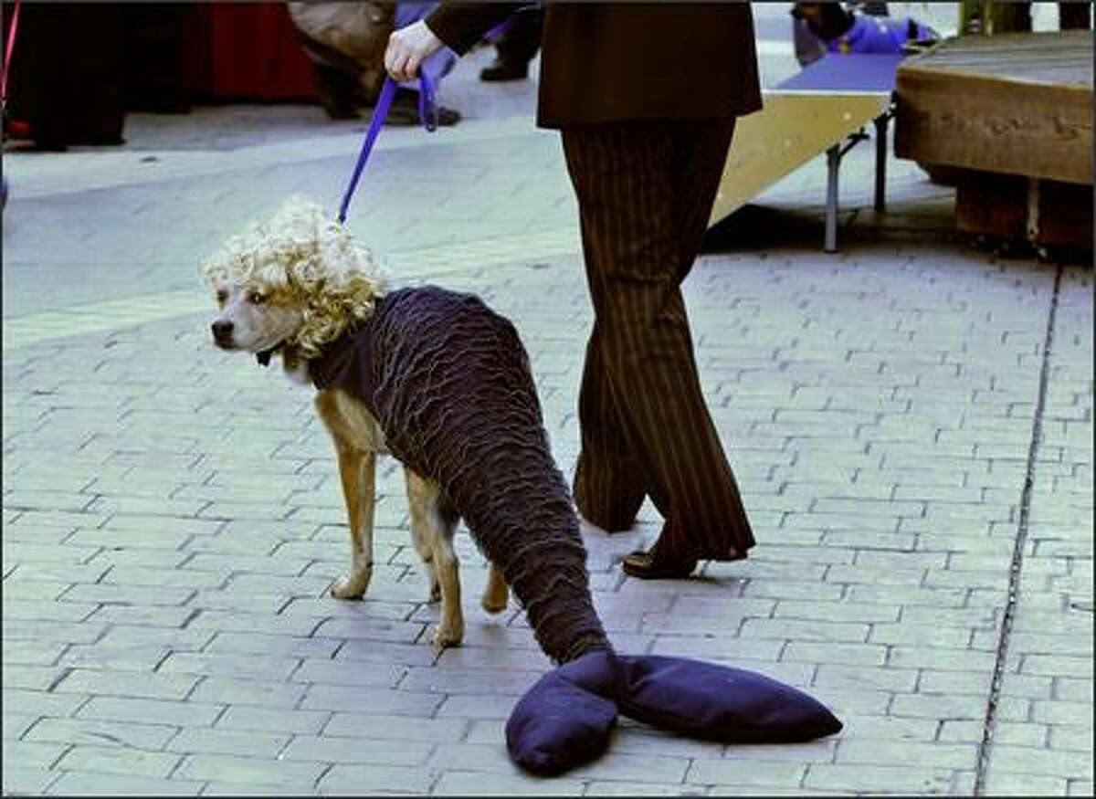 A dog named Ringo wears a mermaid costume during the first annual