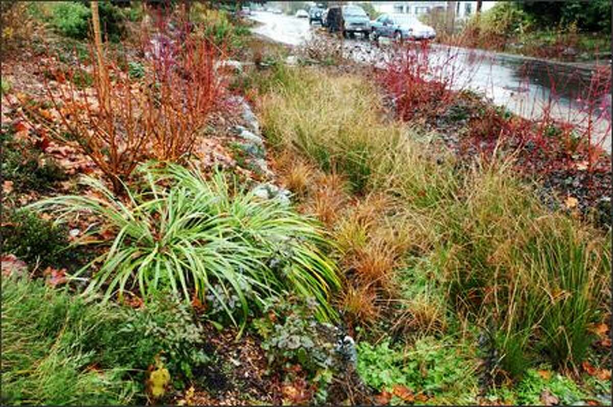 A Seattle Public Utilities' garden in the Greenwood neighborhood uses a natural drainage system to deal with storm-water runoff.