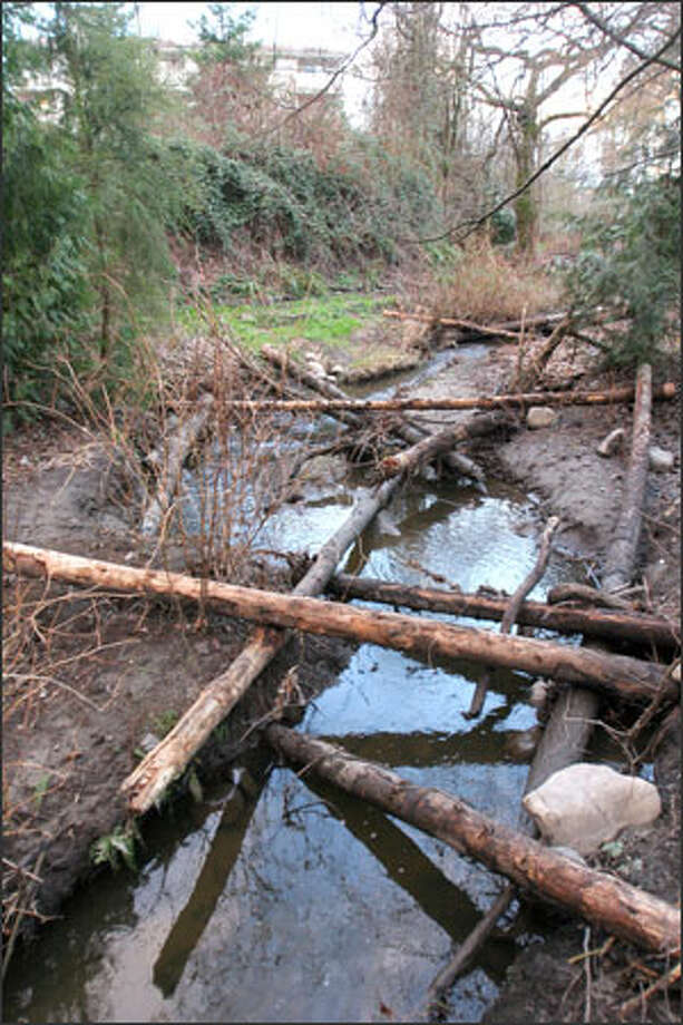 Thornton Creek flows out from under Northgate Mall in Seattle. Environmentalists have been working to uncover the rest of the stream. Photo: Meryl Schenker/Seattle Post-Intelligencer