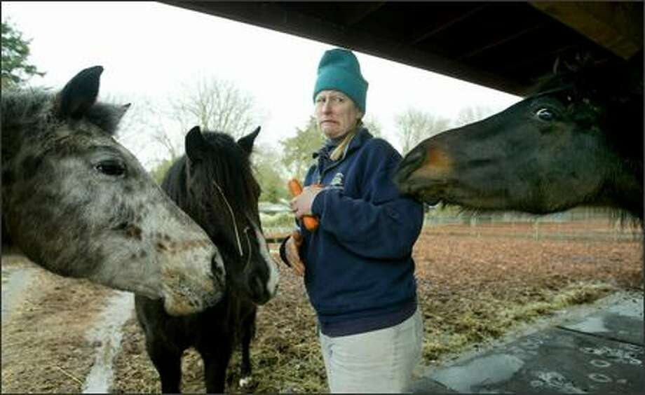 Zookeeper Kristina Williams receives some unexpected attention as she feeds ponies at Woodland Park Zoo. The zoo is canceling, at least temporarily, it's pony rides. Photo: Scott Eklund/Seattle Post-Intelligencer