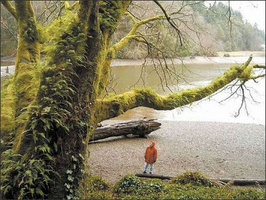 Moss-cloaked trees line the saltwater shoreline on Ellis Cove, a bird-watcher's paradise, at Priest Point Park near Olympia. The Ellis Cove Trail, the park's primary footpath, is a three-mile loop. Photo: KAREN SYKES