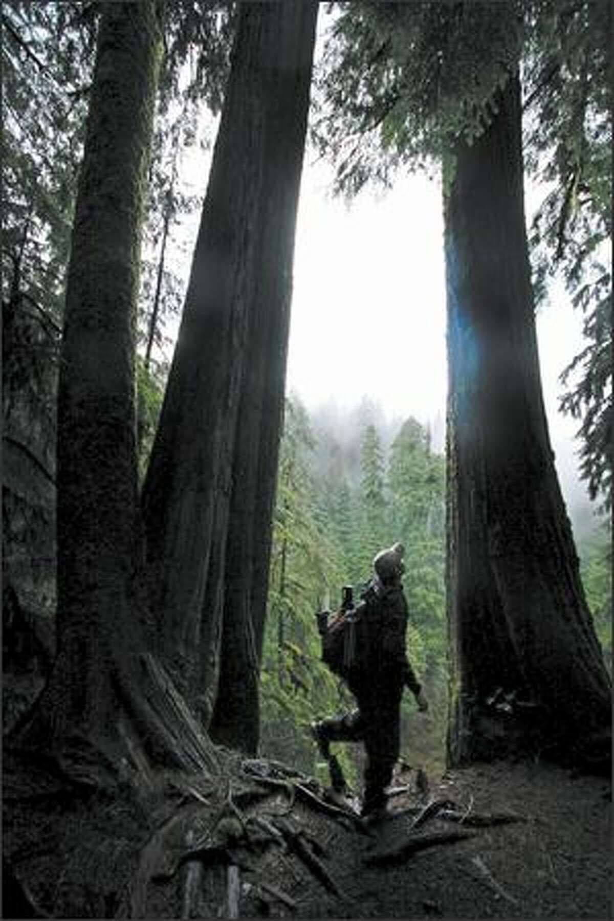 Mike Naiman of Seattle hikes along the Boulder River Trail east of Arlington in Snohomish County.