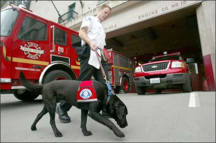 Henny, a black Labrador, walks with her handler, fire Lt. Stephen Baer, at department headquarters. She is trained to detect evidence of accelerants. Photo: Paul Joseph Brown/Seattle Post-Intelligencer