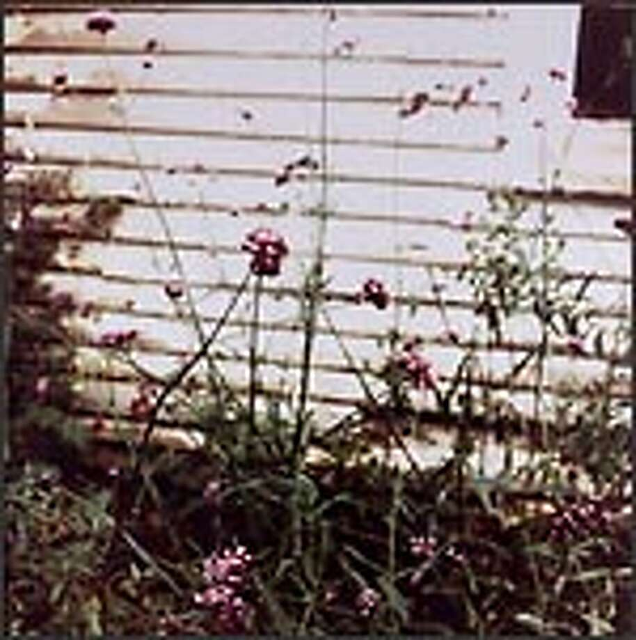 "Jack Pierson's ""The Side of Tim's Barn"" is a chromogenic color print, 38 inches high by 30 inches wide, from 1995."