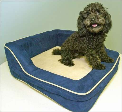 Hyperion's portable heated pet bed will be available at pet stores and veterinarian clinics this year. Photo: Grant M. Haller/Seattle Post-Intelligencer