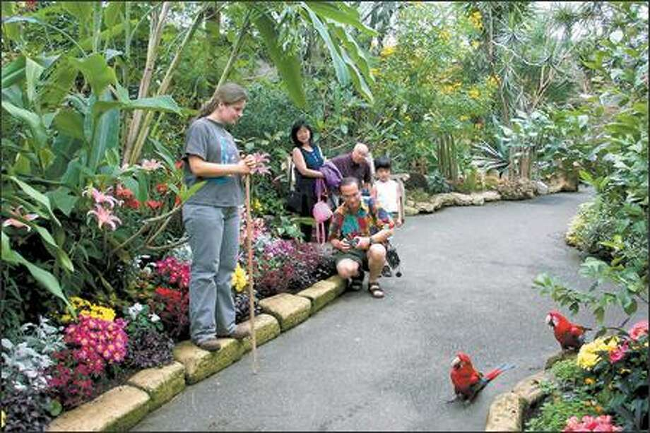 Visitors to the Bloedel Conservatory in Queen Elizabeth Park, Vancouver's only covered garden, enjoy birds, butterflies and lush floral vistas. Photo: VANCOUVER PARK BOARD