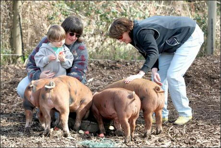 Pigs raised by Shelly Pasco-Verdi (left, with son Cosmo) and her husband are destined for chef Tamara Murphy's (right) kitchen. Photo: Meryl Schenker/Seattle Post-Intelligencer