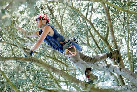 Capitol Honda Service >> Arborist is climbing to win - seattlepi.com