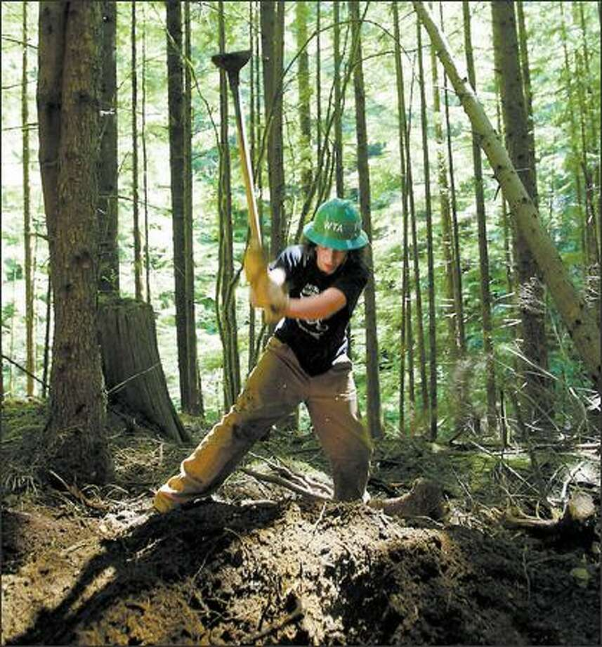 Peter Lawson takes a big swing with his ax, taking out a root, during a long day building a trail with a teenage crew in Wallace Falls State Park. Photo: PAUL JOSEPH BROWN/P-I
