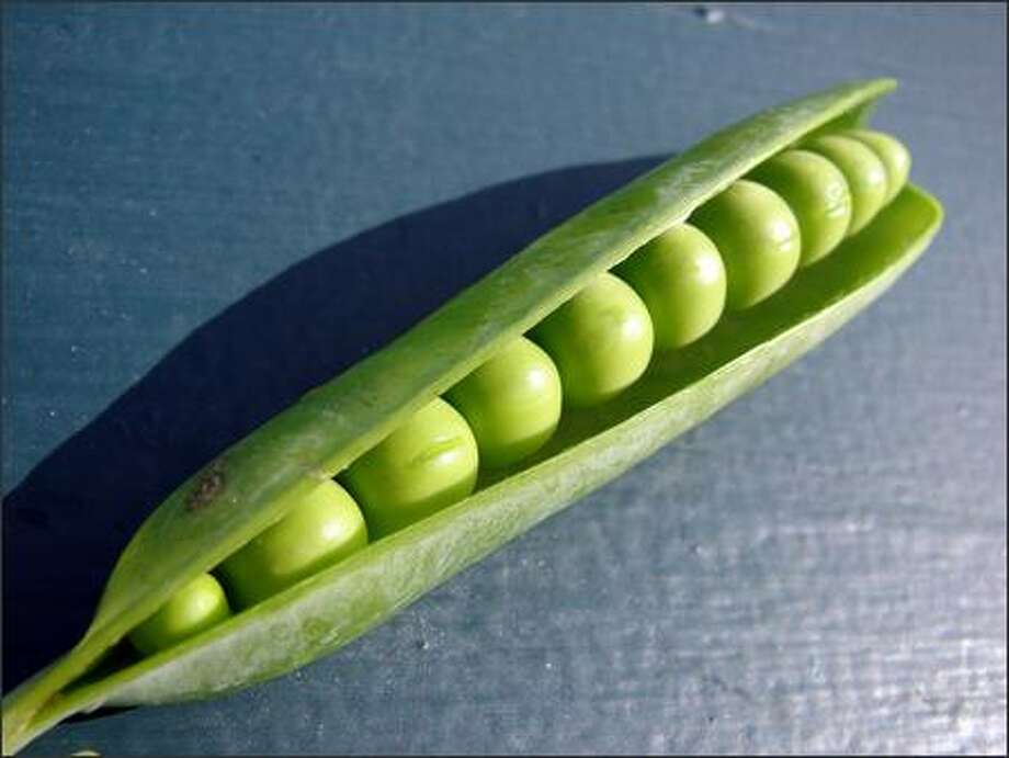 Gather pea seeds when the pods begin to split open naturally. Photo: /