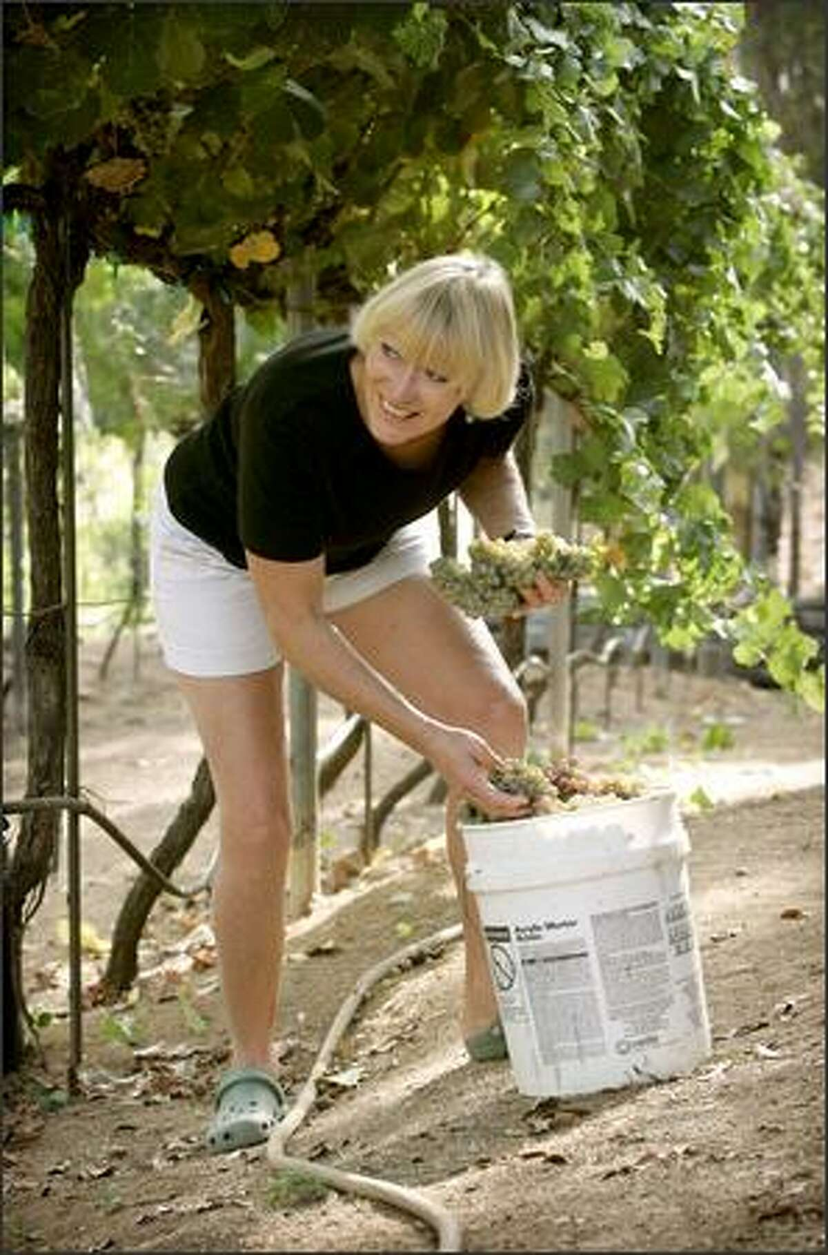 Patty Johnson picks grapes she and her husband, Bob Weirich, will use to make wine at their home in Ramona, Calif., which is outside San Diego. The couple own 2 1/2 acres.