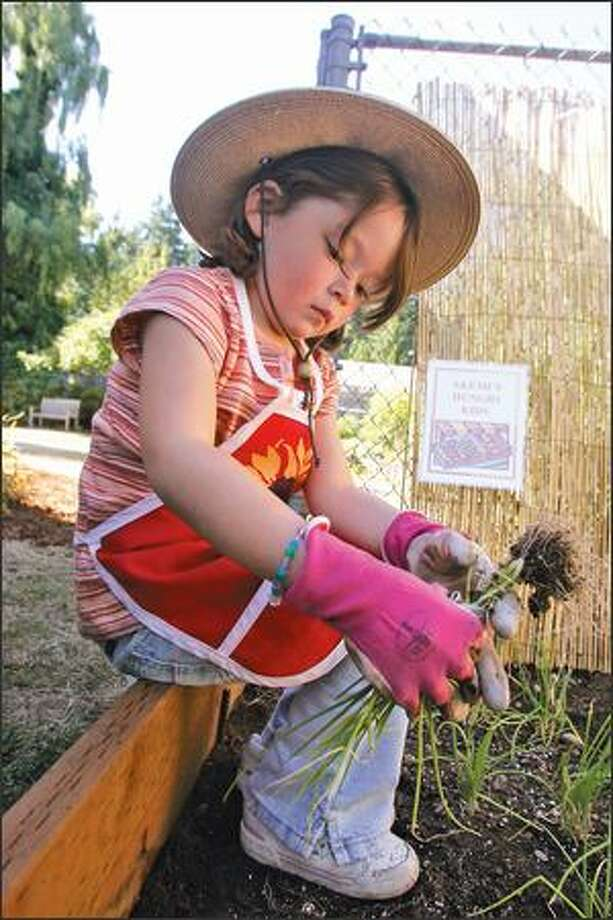 "Akemi Takahashi, 5, works in her Bellevue garden. ""I wanted to help people like Calista,"" she said. Photo: Mike Kane/P-I"
