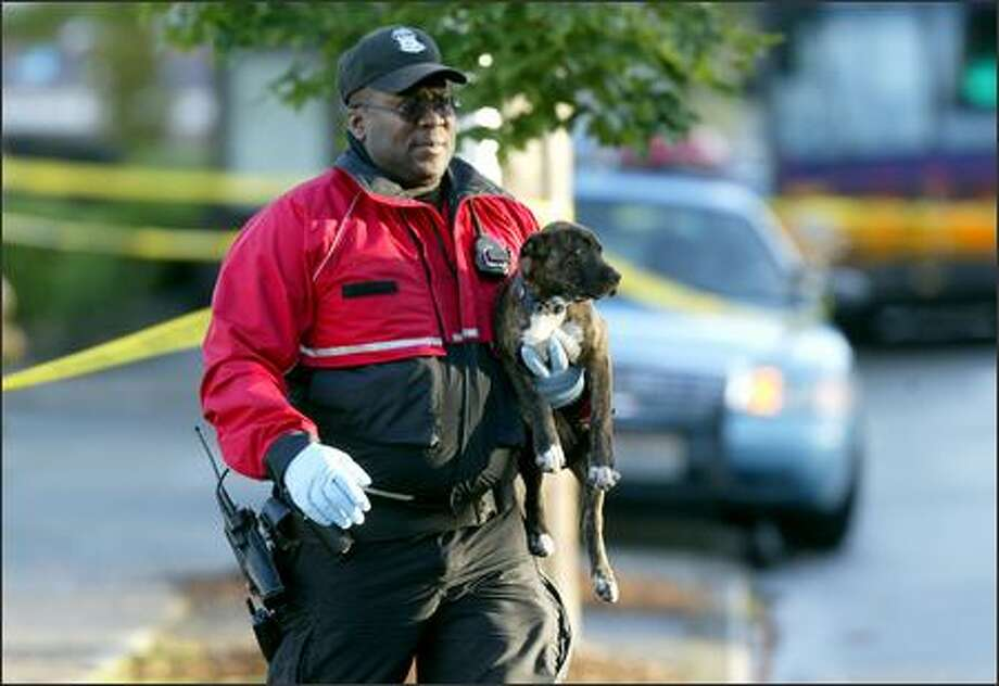 An animal control officer removes a dog from a car in which a man was shot to death during a suspected traffic altercation on Rainier Avenue South. Another man in the car also was shot and transported to Harborview Medical Center with life-threatening injuries. After the shooting, the dog stayed in the car for about two hours while investigators examined the scene. Photo: Joshua Trujillo/Seattle Post-Intelligencer