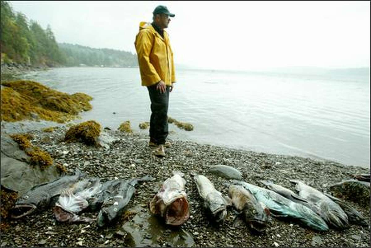 Researcher Wayne Palsson and colleagues at the state Department of Fish and Wildlife found dead crab and fish, including lingcod, in oxygen-poor areas of southern Hood Canal.