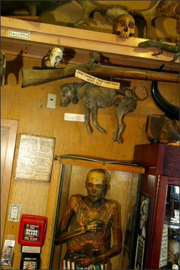 Our fascination with death is not a recent development. Ye Olde Curiosity Shop on the Seattle waterfront has had Sylvester the mummy on display since 1955. Photo: Karen Ducey/Seattle Post-Intelligencer
