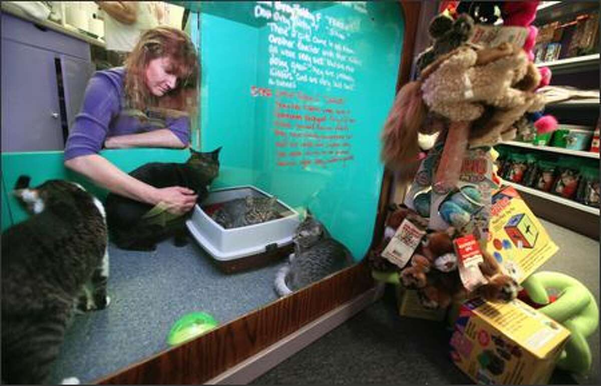 Missy Young comforts some of the shaken cats and checks them for injuries a day after her pet store and animal shelter was robbed.