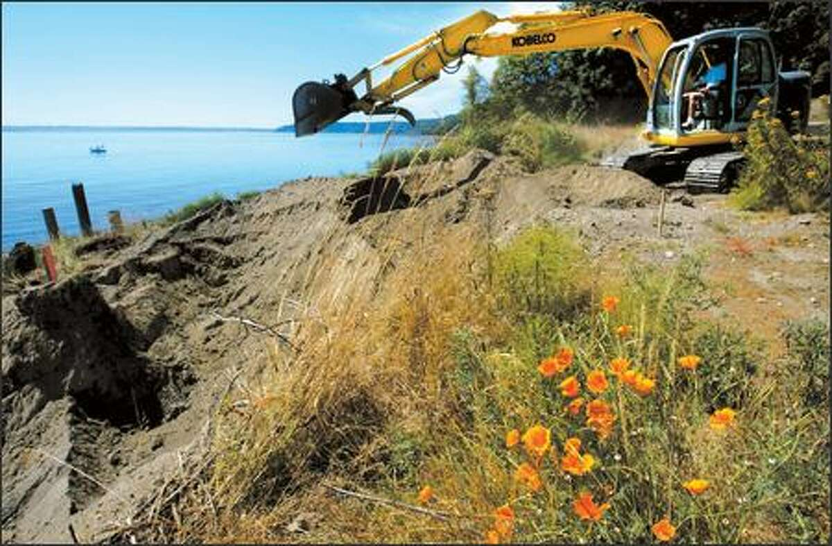 On the south end of Vashon Island, landowner Pat Collier removed the bulkhead from her beach to restore native seashore. Extensive armoring of shorelines throughout the Sound ruined areas that serve as incubators for many small fish.