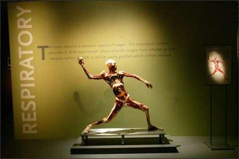 Museum proprietors protest 'Bodies' show - seattlepi com