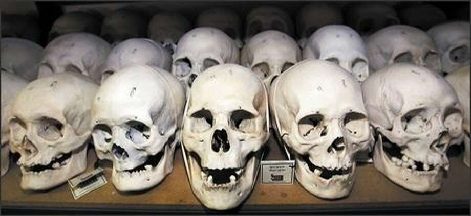 Human skulls line a shelf at Skulls Unlimited, where they are cleaned of tissues, sanitized, then sold. Photo: / Associated Press