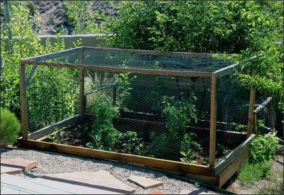 Building cages around plants is one way to protect them from squirrels. Photo: JOE LAMP'L/DIY NETWORK