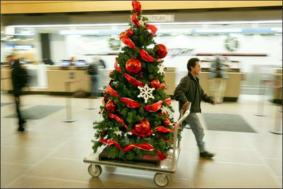It was all smiles and cheers as Christmas trees were rolled into the terminal after being taken down due to the threat of a lawsuit at Sea-Tac Airport on Monday. Photo: Joshua Trujillo/Seattle Post-Intelligencer