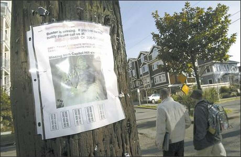 """Buster is missing. If you find our little buddy, call us at ..."" reads a sign John Koenig posted on Capitol Hill after his cat disappeared Dec. 19. Koenig said he put up about 60 posters in the neighborhood. Photo: Andy Rogers/Seattle Post-Intelligencer"