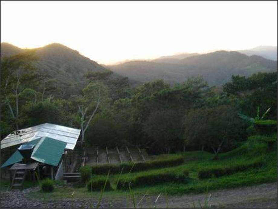 A coffee plantation near the El Eden farm in Nicaragua. Some of the coffee beans grown at El Eden are already showing up in Seattle cups. Camano Island Coffee Roasters, which buys organic, free-trade beans, is a customer of the Agros farm. Photo: Tom Paulson/Seattle Post-Intelligencer