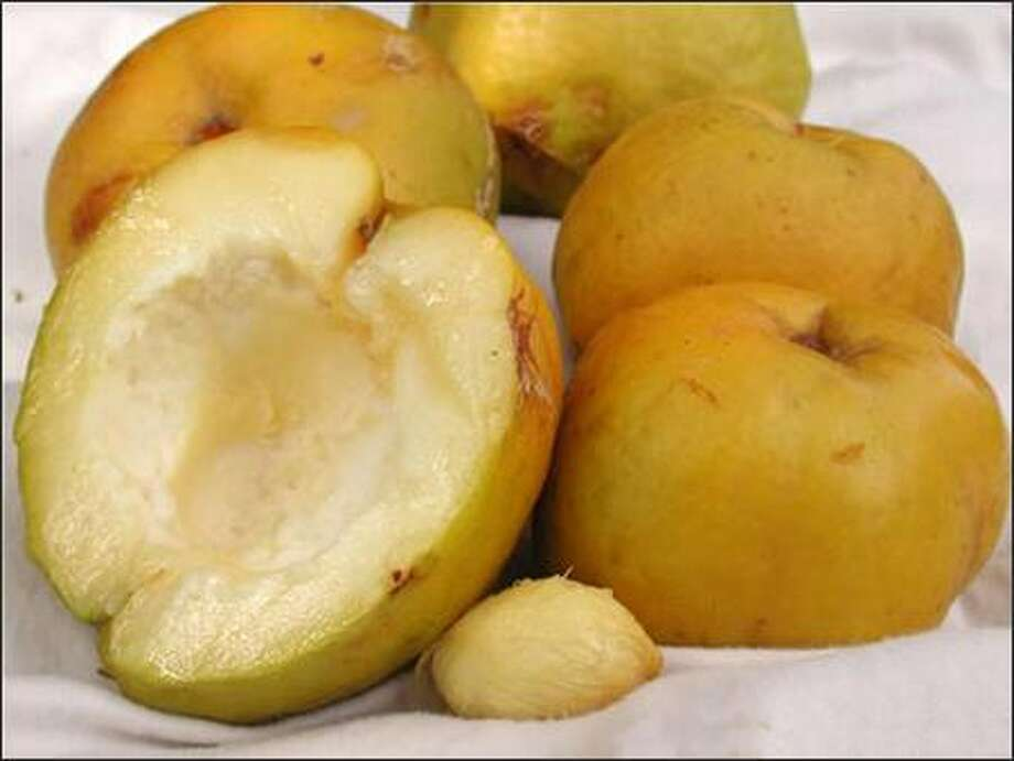 The white sapote is pleasant-tasting, but it doesn't have enough acid to give it the flavor edge over a nicely ripened mango, pear or peach. Photo: PINE ISLAND NURSERY PHOTO