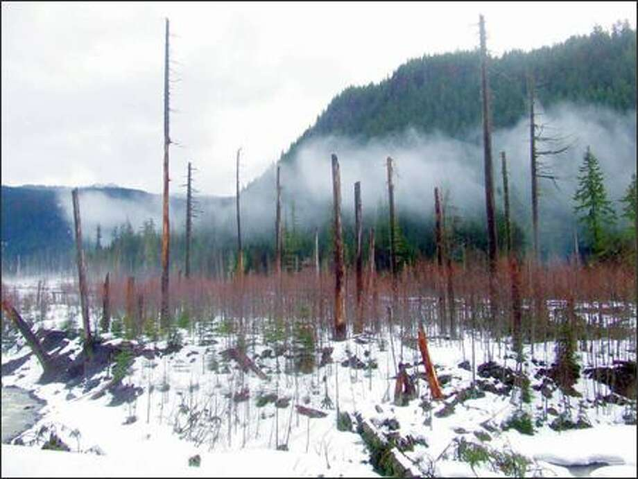 About two miles up the West Side Road is a tormented stretch of the Tahoma Creek valley. Photo: KAREN SYKES