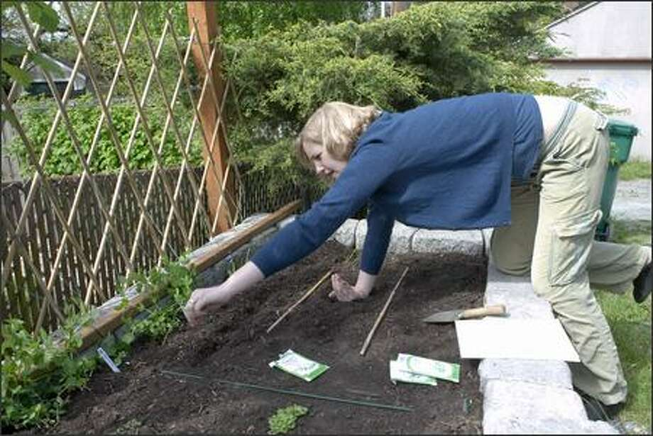 Lisa Stiffler plants arugula seeds in her raised beds. Photo: Grant M. Haller/Seattle Post-Intelligencer