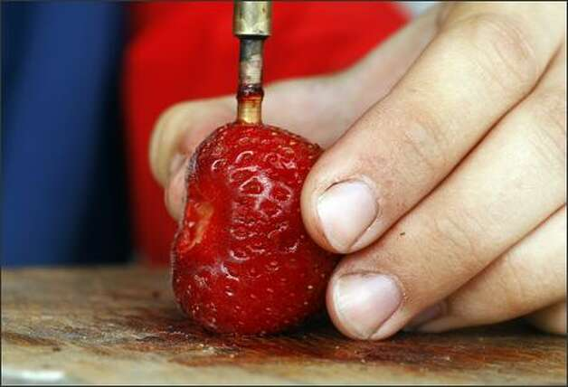 A strawberry is pressure tested. Photo: GILBERT W. ARIAS/P-I