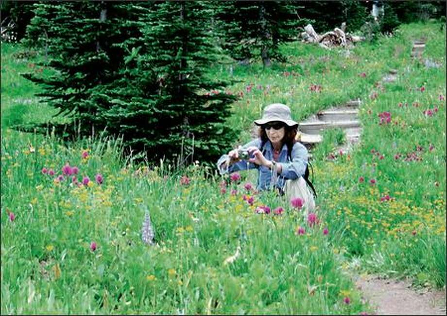 Barbara Eller of Seattle composes her shot of wildflowers in Grand Park, a vast two-mile-long, mostly flat meadow on the north side of Mount Rainier National Park. Photo: KAREN SYKES