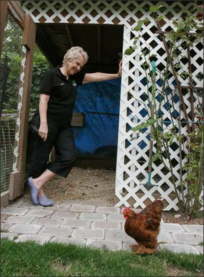 Pat Tosch, laughing at her chicken at her Newcastle home, has been a King County Sheriff's Office chaplain for six years. Photo: Meryl Schenker/Seattle Post-Intelligencer