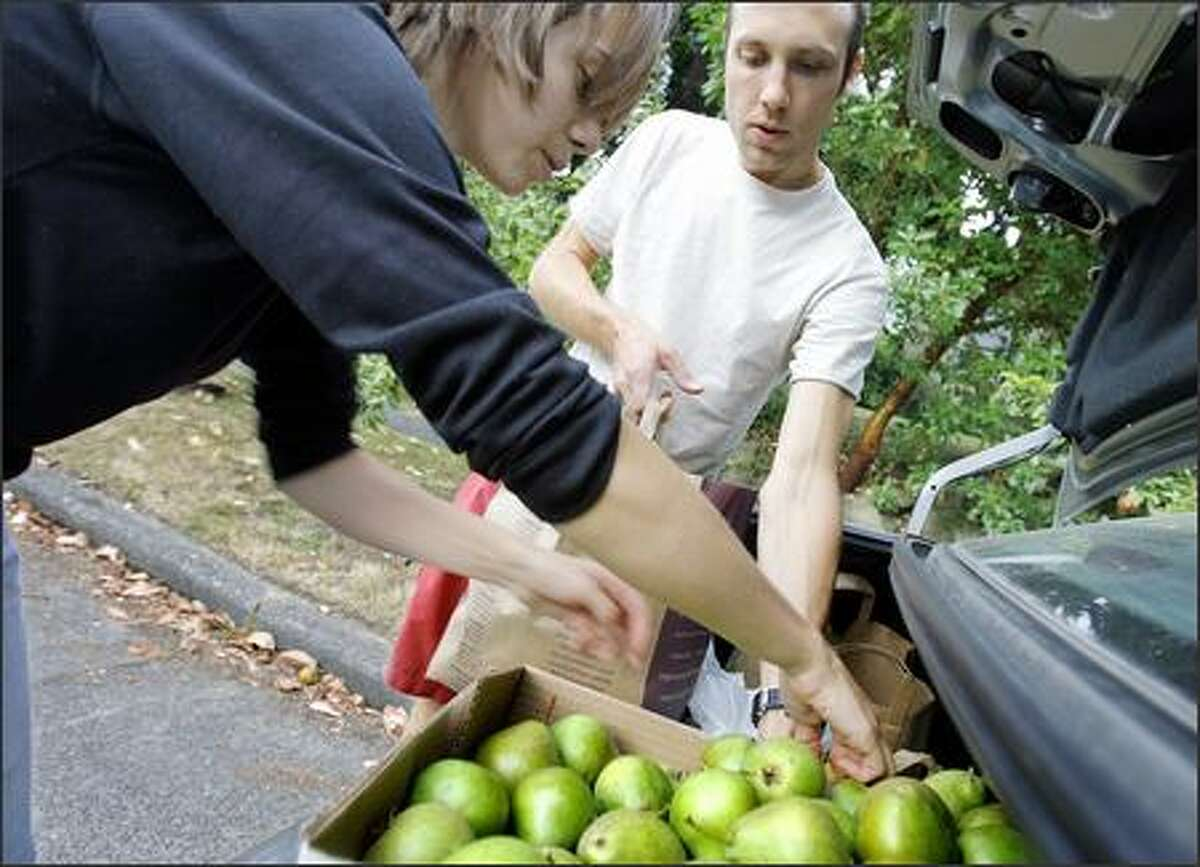 Volunteer picker Ashley Fent, left, loads pears into the trunk of fellow volunteer Mike Dussault's car at the home of Doug Plummer in Seattle. Fent and Dussault work with Community Fruit Tree Harvest, which picks residents' fruit for free and takes it to area food banks.