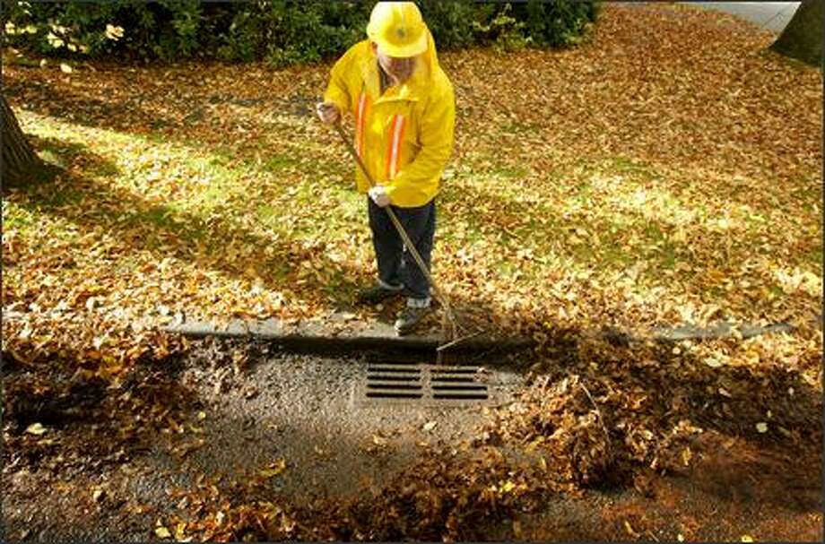 Tom Gannon of Seattle Public Utilities demonstrates how to clean leaves from a drain as part of a new program where the public is asked to help keep drains clear. Seattle has 80,000 storm drains. Photo: Joshua Trujillo/Seattle Post-Intelligencer