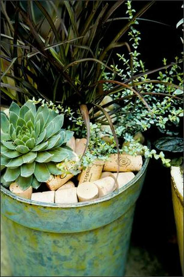 After the wine is gone, the corks are put to good use mulching a metal pot planted with Sempervivum (hens-and-chicks), silver thyme and Phormium 'Jack Spratt.' Photo: Andrew Buchanan /