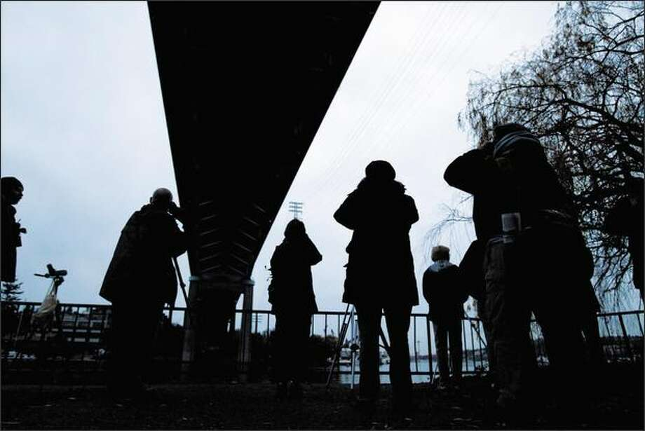 A Seattle Audubon group gathers under the Ship Canal Bridge to look for peregrine falcons. The undersides of bridges and some buildings mimic the peregrines' usual habitat: cliffs near water. The birds also inhabit the Washington Mutual Tower, Ballard Bridge, Port of Seattle grain terminal, West Seattle Bridge and First Avenue South Bridge. Photo: GRANT M. HALLER/P-I