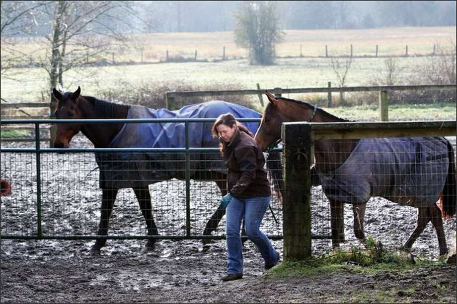 Katie Merwick tends to the horses at her Second Chance Ranch in Elma. During the devastating storm that hit Grays Harbor County, Merwick helped rescue several of her neighbors' horses, in one case by swimming out to a horse whose nostrils were barely above water, despite the fact it was standing in the back of a pickup. Photo: Karen Ducey/Seattle Post-Intelligencer